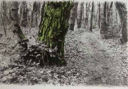 La Promenade de Rilke 12