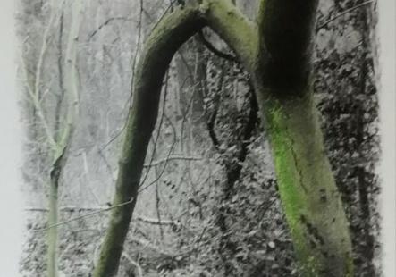 La Promenade de Rilke 7