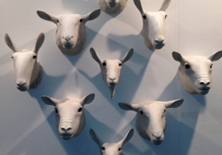 Sheep and Goat Heads