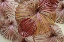 Koubai (Red Blossom)