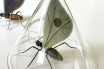 Thorn Bug_ Bridget Bailey