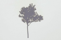 Rachel Wickremer | 'Cherry' (Tree series) | £ 300