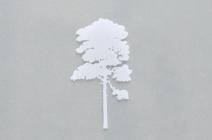 Rachel Wickremer | 'Elm' (Tree series) | £ 300
