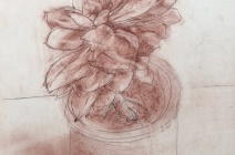Jude Tucker | Sanguine Study of Potted Succulent | £ 400