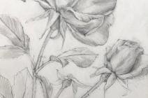 Jude Tucker | Study of Roses | £ 420