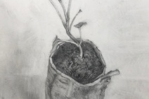 Jude Tucker | Cavolo Nero Seedling in Newspaper Pot | £ 400