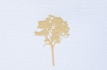 Rachel Wickremer | 'Oak' (Tree series) | £ 300