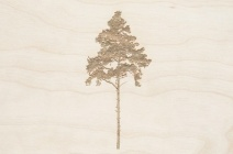 Rachel Wickremer | 'Spruce' (Tree series) | £ 300