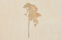 Rachel Wickremer | 'Sycamore' (Tree series) | £ 300